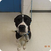 Adopt A Pet :: Otis - Lonely Heart - Gulfport, MS
