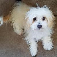 Adopt A Pet :: Cutie Pie - Morgan Hill, CA