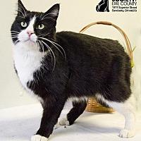 Adopt A Pet :: HOLLY - Sandusky, OH