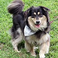 Adopt A Pet :: Harry - Harrison, NY