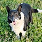 Adopt A Pet :: PRINCESS HAPPY