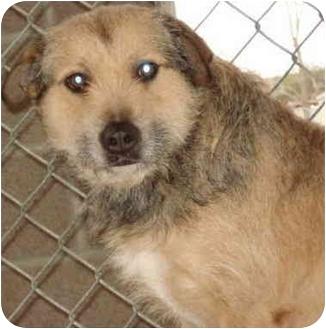 Terrier (Unknown Type, Medium) Mix Dog for adoption in Jacksonville, Arkansas - Bendi