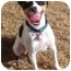 Photo 3 - Jack Russell Terrier Dog for adoption in Phoenix, Arizona - JOKER