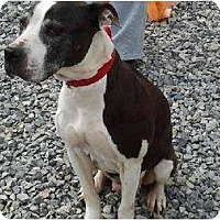 Adopt A Pet :: 3 dogs SOS - Brodheadsville, PA