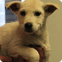 Adopt A Pet :: Gunner(ADOPTED!) - Chicago, IL