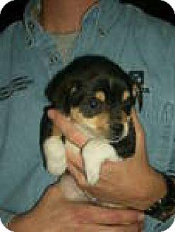 Terrier (Unknown Type, Medium) Mix Puppy for adoption in Olympia, Washington - Mia