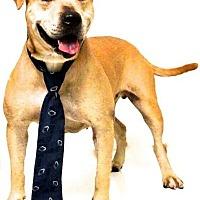 Adopt A Pet :: Maddox - Sebastian, FL