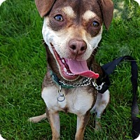 Adopt A Pet :: Carly - Eugene, OR