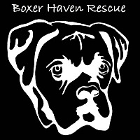 Adopt A Pet :: Foster A Boxer - Waterford, MI
