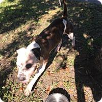 Adopt A Pet :: Sabrina - Orlando, FL
