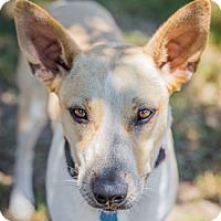 Adopt A Pet :: Zoe - West Hartford, CT