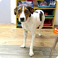 Feist Mix Dog for adoption in Fayetteville, Tennessee - 17-d04-055 Junior