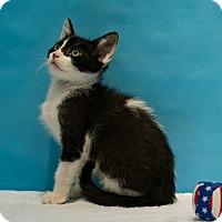 Adopt A Pet :: Tom - Houston, TX