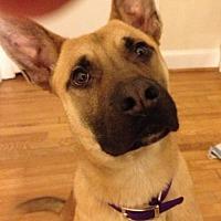 Adopt A Pet :: Clark Kent 4089 - Sterling, VA