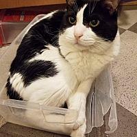 Adopt A Pet :: Bobby - Sherman Oaks, CA