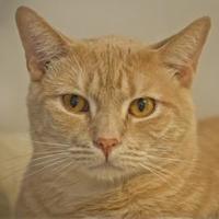 Adopt A Pet :: Big Jack - Elk Grove Village, IL