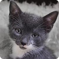 Adopt A Pet :: Divina - Wayne, NJ