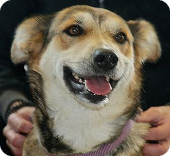 Collie Mix Dog for adoption in Berkeley, California - Lucy