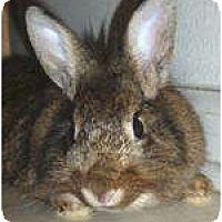 Adopt A Pet :: Bella - Williston, FL