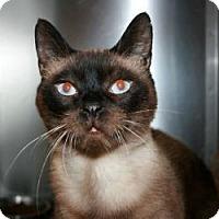 Adopt A Pet :: Ollie - Canoga Park, CA