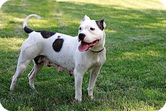 Terrier (Unknown Type, Medium) Mix Dog for adoption in Brookhaven, New York - Boss Lady