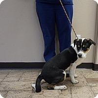 Adopt A Pet :: Reggie - Oviedo, FL