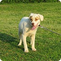 Adopt A Pet :: MILLIE - Bedminster, NJ