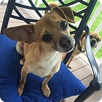 Adopt A Pet :: Frazier - Bucks County, PA