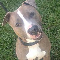 Adopt A Pet :: Fergus - Cherry Valley, NY