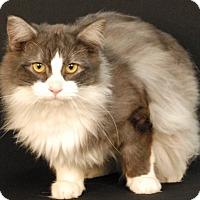 Adopt A Pet :: Sedonis - Newland, NC