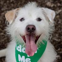Adopt A Pet :: Tuffy - Itasca, IL