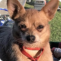 Adopt A Pet :: Gizmo - Buffalo, NY