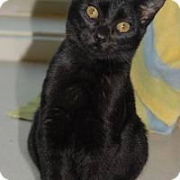 Adopt A Pet :: Tot - Shelbyville, TN