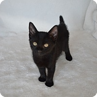 Adopt A Pet :: Josephine - Aurora, CO