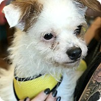 Adopt A Pet :: James - Boulder, CO