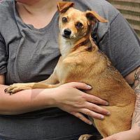 Adopt A Pet :: Mason - Joplin, MO