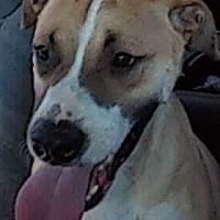 Adopt A Pet :: Coco - Palm Desert, CA