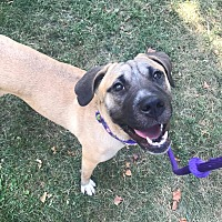 Adopt A Pet :: Charlie - Germantown, OH
