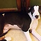 Adopt A Pet :: Danville Geronimo