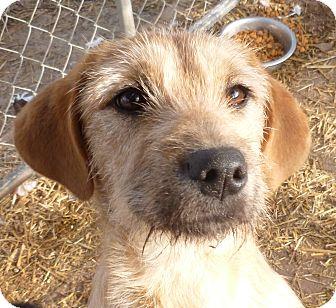 Terrier (Unknown Type, Medium) Mix Dog for adoption in Boaz, Alabama - Tessa