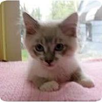 Adopt A Pet :: Marty - Shelton, WA