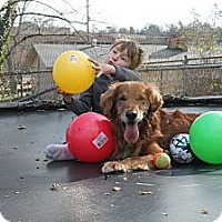 Adopt A Pet :: Riley - Danbury, CT