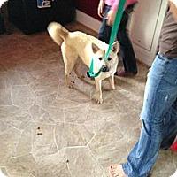 Adopt A Pet :: Seth - Hancock, MI