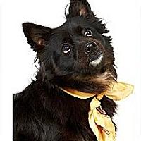 Adopt A Pet :: Santa Maria - New York, NY