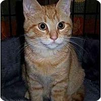 Adopt A Pet :: Rhett - Spencer, NY