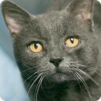 Adopt A Pet :: Grits - Manteo, NC