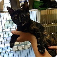 Adopt A Pet :: Willamina - Armuchee, GA