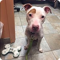 Adopt A Pet :: Sunflower - Park Ridge, NJ