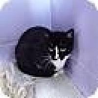 Adopt A Pet :: Zoey - Port Clinton, OH