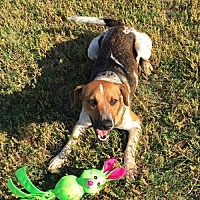 Adopt A Pet :: Sandy - Crestview, FL